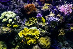 Oceanic sealife aquarium with mosaic of many species of colorful. Corals in a zoological oceanarium stock photography