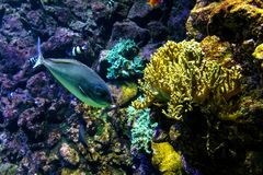 Oceanic sealife aquarium with mosaic of many species of colorful. Corals in a zoological oceanarium royalty free stock photography