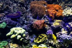 Oceanic sealife aquarium with mosaic of many species of colorful. Corals in a zoological oceanarium stock photo