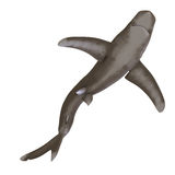 Oceanic whitetip shark. Dangerous shark. 3D render with clipping path and shadow over white Stock Photo