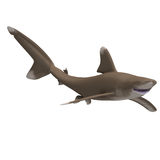 Oceanic whitetip shark. Dangerous shark. 3D render with clipping path and shadow over white Stock Images