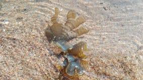 Oceaniczne flory, seashells, gałęzatka India, Gokarna Fotografia Stock