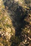 Oceaniczni baseny z gałęzatką, skały i morski życie Widzieć od above fotografia stock