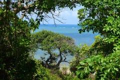 Oceano Índico Fotos de Stock