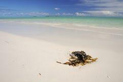 Oceano Índico bonito Foto de Stock Royalty Free