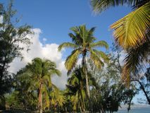Oceano Índico, Reunion Island, floresta tropical amaizing fotos de stock royalty free