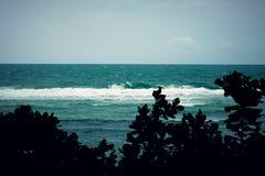 Oceano fotografie stock libere da diritti