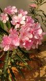 Oceano bonito da flor dentro fora fotos de stock royalty free