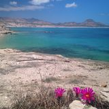 Oceano claro da água azul com flores Fotos de Stock