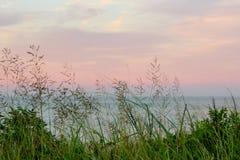 Oceano colorido do céu do por do sol da grama selvagem do mar Imagens de Stock Royalty Free