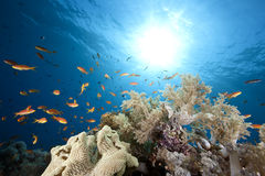 Oceano, corallo e pesci fotografia stock