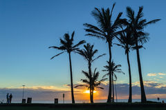 Oceano Dawn Trees Silhouetted da praia foto de stock royalty free