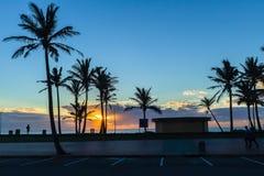 Oceano Dawn Trees Silhouetted da praia fotos de stock royalty free