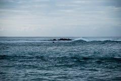 Oceano de prata, pouca ilha na água com selos nela Fotos de Stock Royalty Free