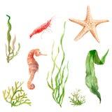 Oceano dell'insieme dell'acquerello, mare: alga, stella marina, ippocampo, gamberetto illustrazione di stock