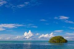 Oceano e árvore fotografia de stock