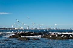 Oceano e città Immagini Stock Libere da Diritti