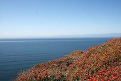 Oceano e fiori Fotografia Stock