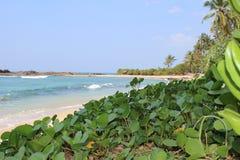 Oceano e hortaliças Fotos de Stock Royalty Free