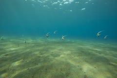 Oceano e peixes Imagens de Stock