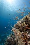Oceano e pesci Fotografia Stock Libera da Diritti