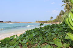 Oceano e pianta Fotografie Stock Libere da Diritti