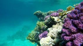 Oceano, i coralli e pesce archivi video