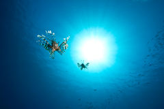 Oceano, lionfish e sol Foto de Stock