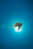 Oceano, lionfish e sol foto de stock royalty free