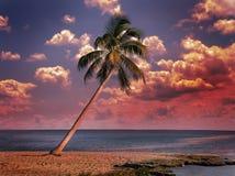 Oceano no por do sol Imagem de Stock Royalty Free