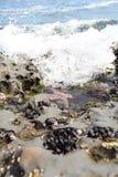 Oceano Pacífico Imagens de Stock