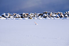 Oceano que congela-se ao gelo durante winter.GN frio imagem de stock royalty free