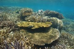 Oceano raso subaquático de South Pacific do recife dos corais fotografia de stock