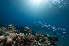 Oceano, scogliera e pesci fotografie stock libere da diritti