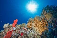 Oceano, sol e peixes fotografia de stock royalty free