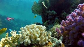 Oceano, subacqueo, i coralli ed il pesce archivi video