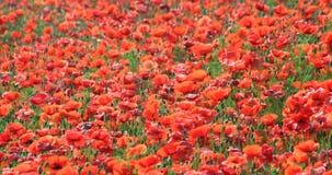 Oceano vermelho Fotografia de Stock Royalty Free