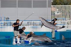Oceanografic Aquarium Royalty Free Stock Images