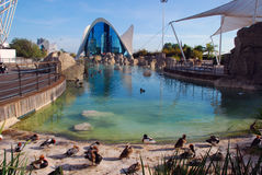 Oceanografic i Valencia, Spanien Royaltyfri Fotografi