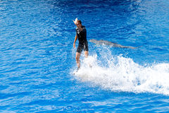 Oceanographic Dolphins' Show Royalty Free Stock Images