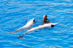 Oceanographic Dolphins' Show Stock Photography