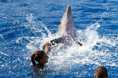 Oceanographic Dolphins' Show Royalty Free Stock Photography