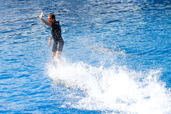 Oceanographic Dolphins' Show Stock Photo