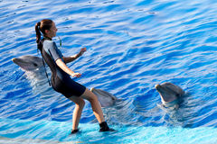 Oceanographic Dolphins' Show Royalty Free Stock Photos
