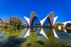 Oceanographic of Valencia. In the City of Arts and Sciences Royalty Free Stock Images
