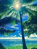 Oceanos & palmas de Samoa Fotos de Stock
