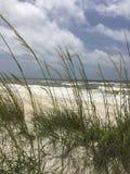 Oceanside. Ocean viewed through sea grasses Royalty Free Stock Image
