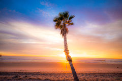 Oceanside palms Stock Image