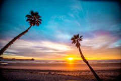 Oceanside palms Stock Photo