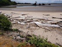 Oceanu Driftwood przy Oregon oceanside z plażą obrazy royalty free